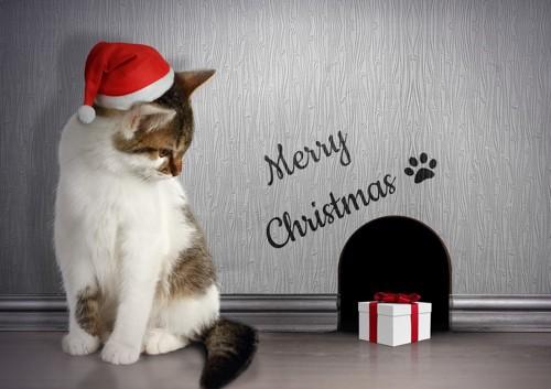 クリスマスカード風な猫