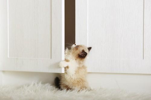 扉を開ける子猫