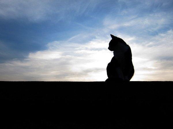 待つ猫のシルエット