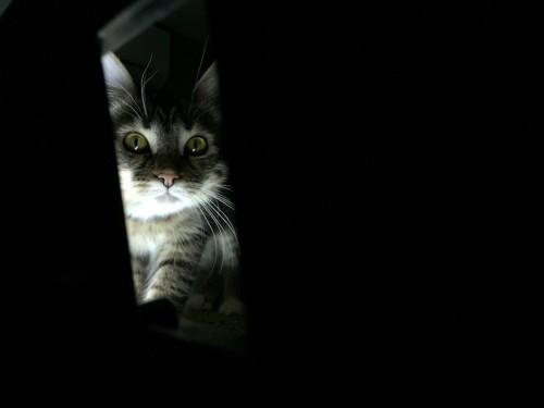 暗闇でこちらを見つめる猫