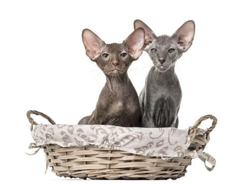 痩せている二匹の猫