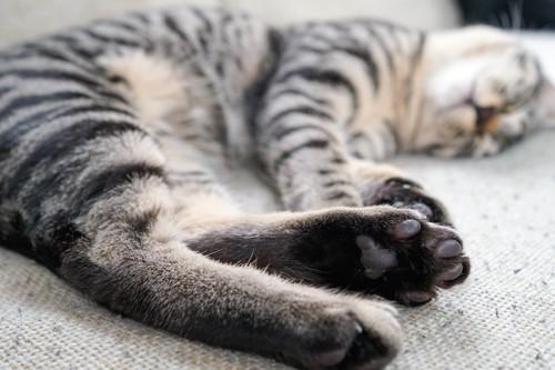 寝転がっている黒色の肉球をした猫