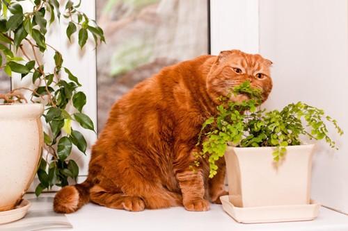 植物をかじる猫