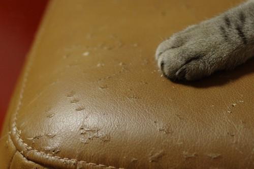 猫の手と爪とぎで傷ついたソファー