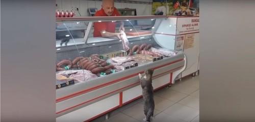 でかいお肉に興奮をする猫