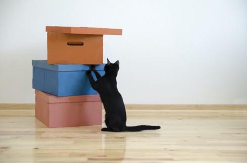 積まれた箱に興味を示す黒猫