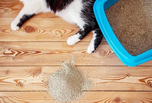 白黒猫の足とトイレとこぼれた猫砂
