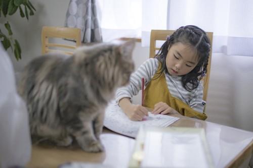 色鉛筆と猫