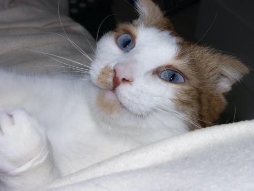 鼻にシミがある猫