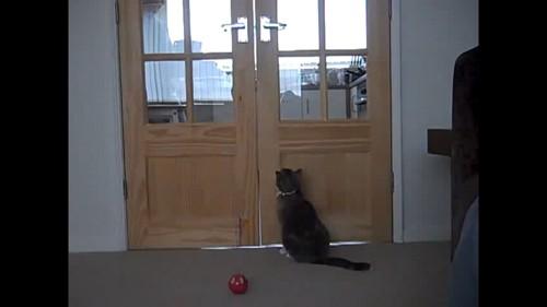 ドアの前に猫