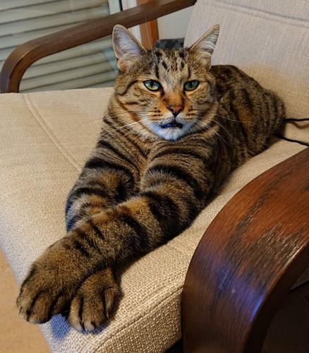 キジトラ猫ちゃん
