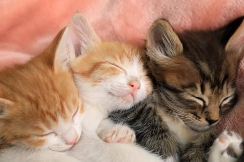 くっついて一緒に眠る3匹の子猫