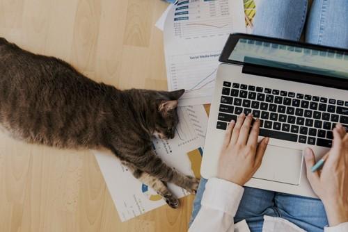 キーボードを叩く飼い主に手を伸ばす猫