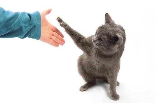 人間にパンチをする猫