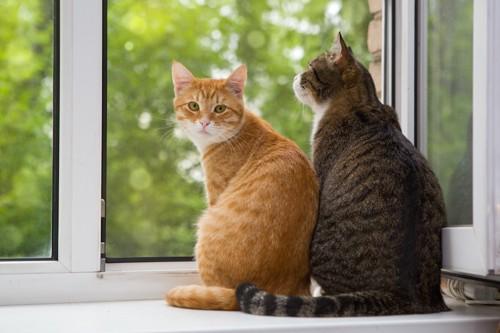 窓辺で振り返る猫と後ろ姿の猫