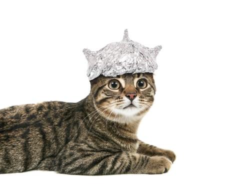 アルミホイルの帽子をかぶる猫