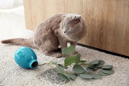 花瓶をひっくり返して目を逸らす猫