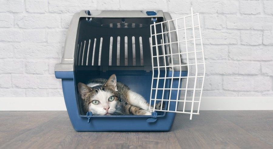 キャリーケースの中で横になる猫