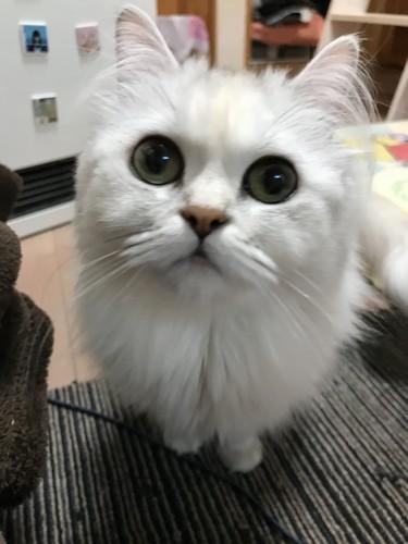 寄ってくる猫