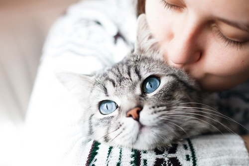 キスをされる猫