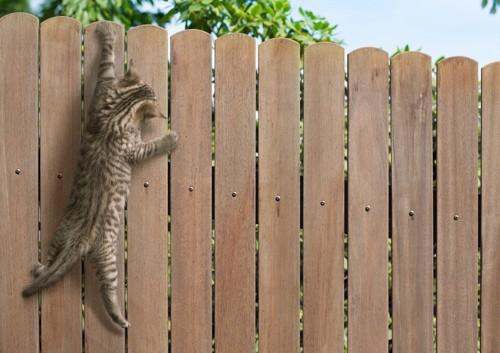 壁から落ちそうな猫