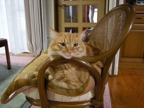 茶トラ猫ちゃん
