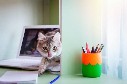 パソコンが置かれた机の上で舌なめずりする猫