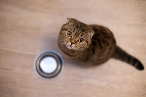 食事を待つ猫