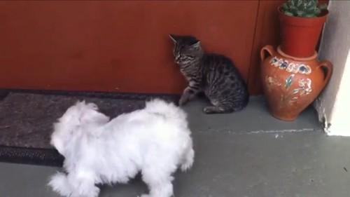 悔しそうな猫