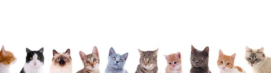 様々な種類の猫たちの顔