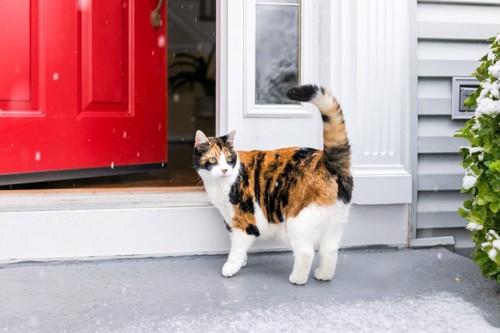 家に帰る猫