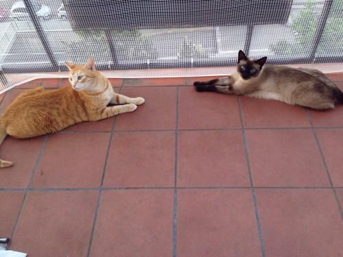 くつろぐ猫たち
