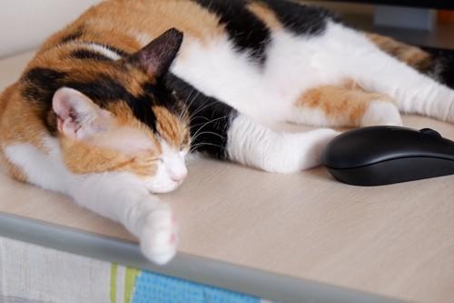テーブルの上で寝ている三毛猫