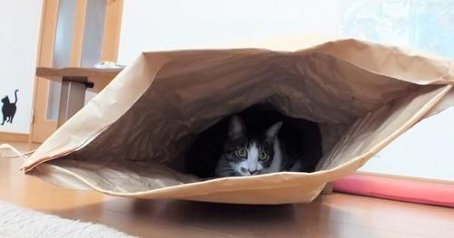 袋の中の猫の様子