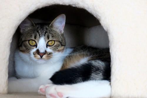猫の部屋に入っている猫