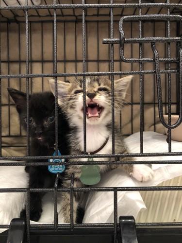 ベビー猫(2匹)