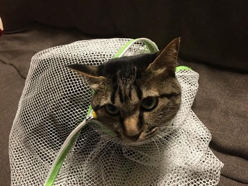 洗濯ネットの中にいる猫