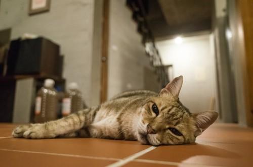 体調の悪そうな猫