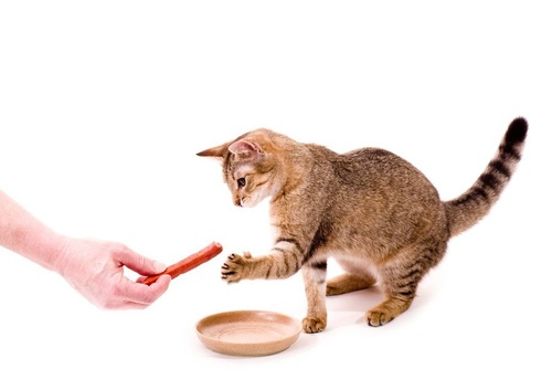 おやつっぽいものを見せられる猫