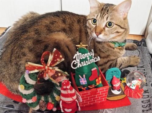 クリスマスを楽しむ猫