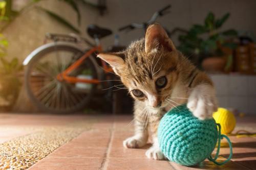 玉を転がして遊ぶ子猫