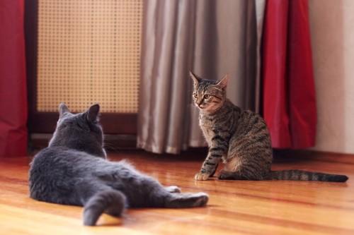 猫を見つめる猫