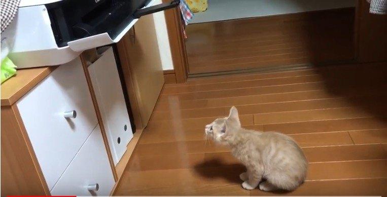 何をしているの?
