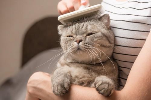 ブラッシングされている猫