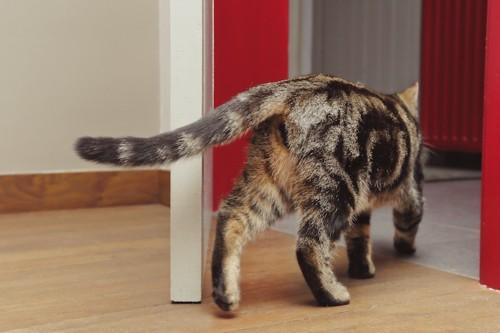 ドアから出て行く猫
