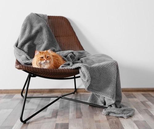 椅子の上にいる茶色の猫