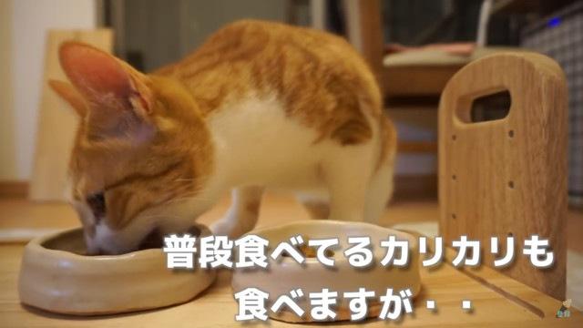 普段のごはんも食べる猫
