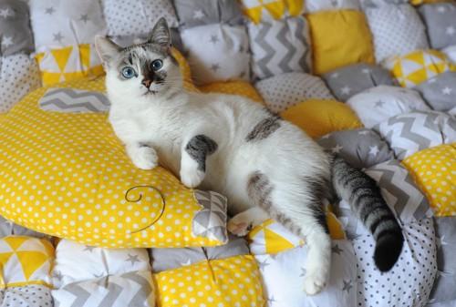 黄色の枕と猫