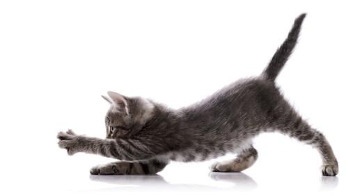 伸びをする子猫