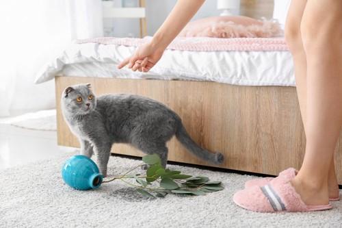 花瓶を倒して叱られている猫